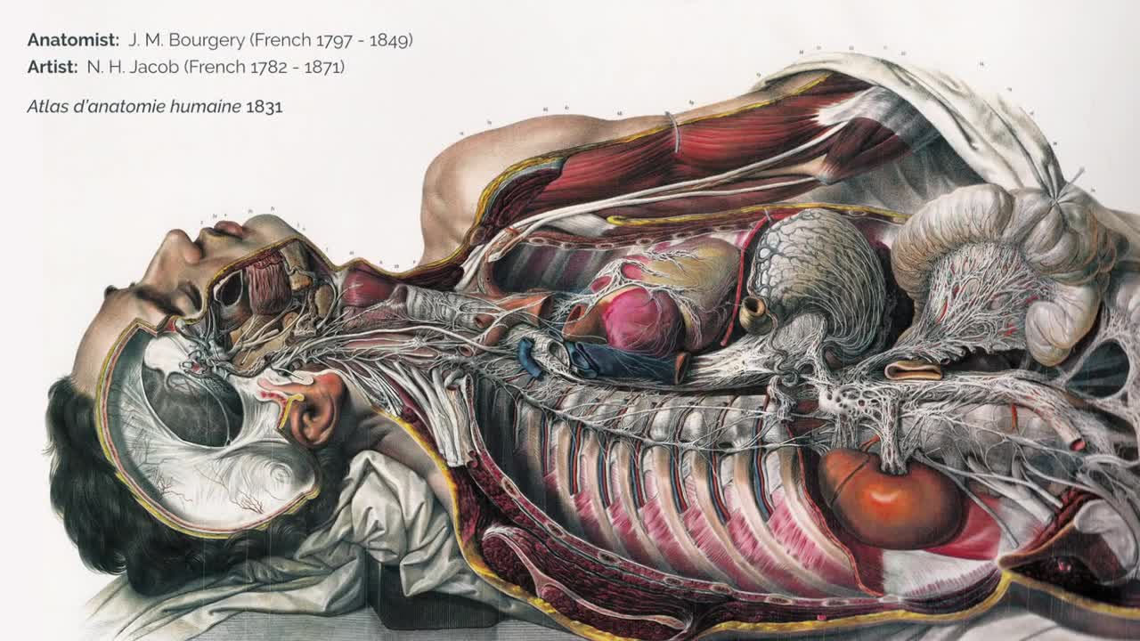 The spellbinding art of human anatomy | Vanessa Ruiz